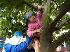 ゆり組&ひまわり組が木登りにチャレンジ!